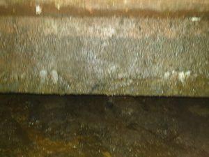 hình ảnh phân trong hầm cầu